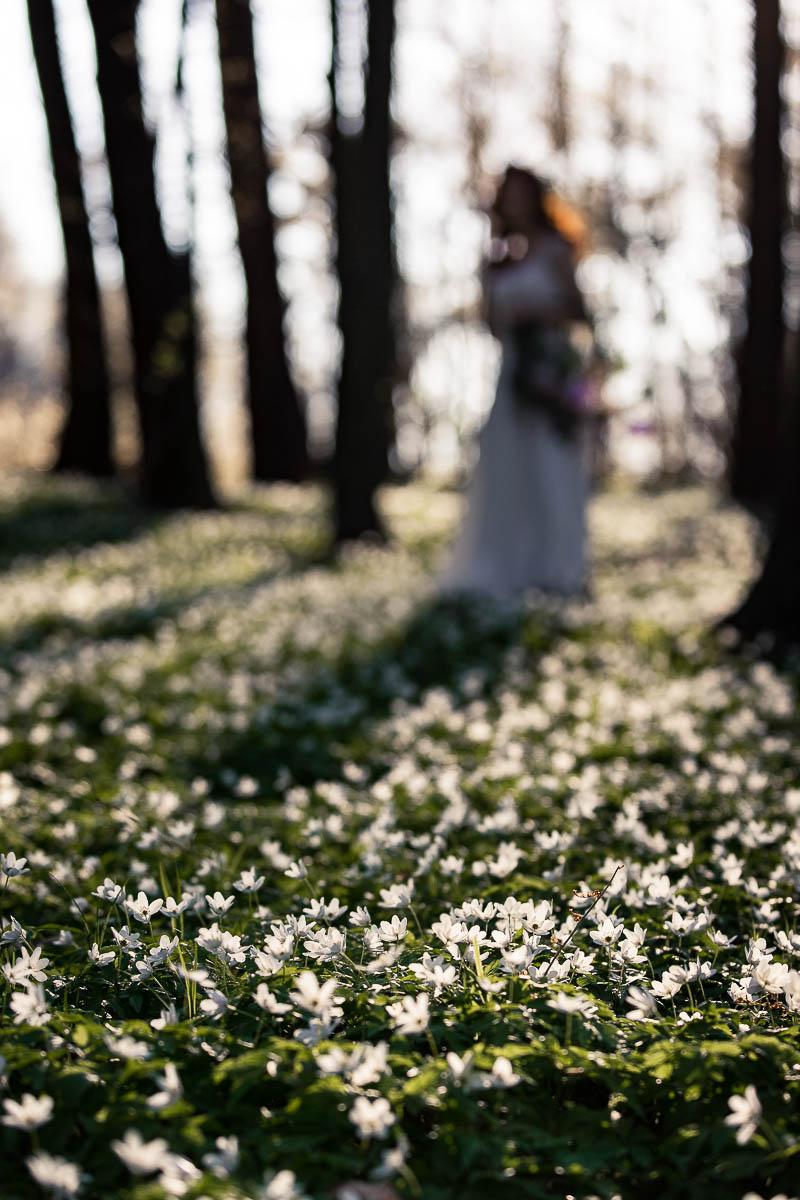 Kwitnące zawilce, a w oddali Pani Wiosna.